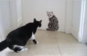 gatos decora 3